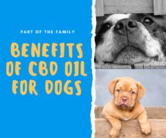 CBD DOGS Post